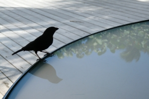 Sick of bird droppings? keep birds off your patio with these tips: